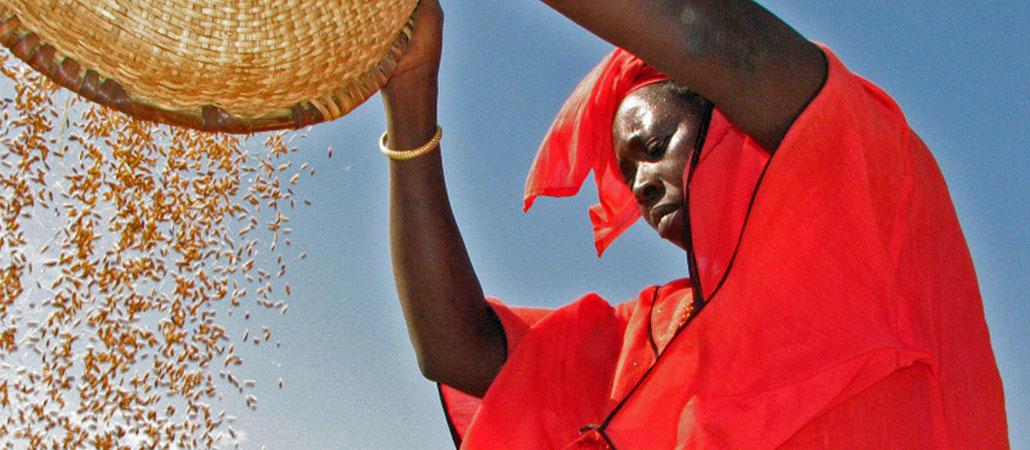 Gambia CRS agricultura arroz fertilizantes