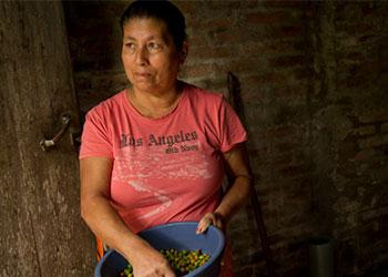 Dolores Calero, de 54 años, es una productora local de café. Dolores tiene una pequeña granja que dirige con la ayuda de su familia y un trabajador adicional. Este arreglo es típico de los pequeños agricultores de esta zona. CARFE ayuda con la producción y comercialización de estos productores. Su finca se encuentra en la Comunidad Siare de San Ramón, Nicaragua. El café representa el 37 por ciento del producto interno bruto de Nicaragua. Foto por Karen Kasmauski para CRS.
