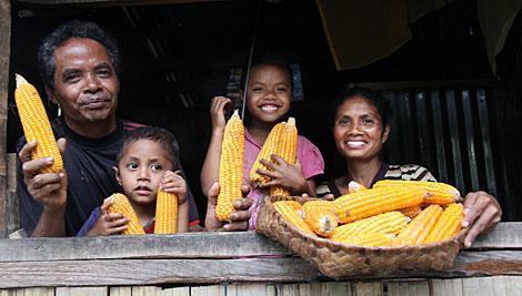 CRS  y nuestros socios están trabajando para ofrecer a los agricultores nuevas variedades de semillas de maíz que resultan en un aumento en el rendimiento de los cultivos. Foto de Jennifer Hardy / CRS