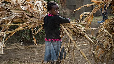 En Tanzania, si los niños no están en la escuela ayudan a sus padres en el campo. La familia realiza gran parte de su trabajo juntos. Foto de Karen Kasmauski para CRS