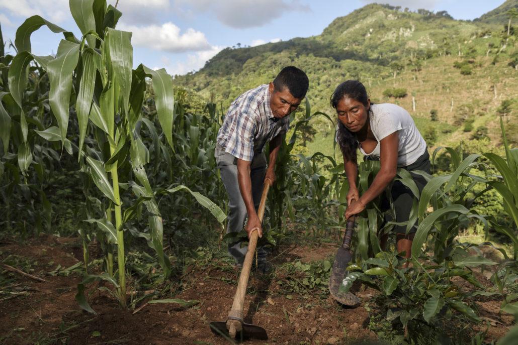 María. 40, y Ovidio, 43, tratando de recuperarse de sequía en Chiquimula, Guatemala. Con apoyo de USAID. CRS y Cáritas ayudarán a más familias afectadas por la sequía en el corredor seco de Guatemala. Foto por Oscar Leiva/Silverlight para CRS.